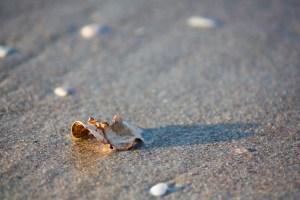 leaf on sand