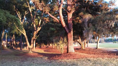 trees on Amelia Island www.mindfulmomma.com