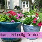 Best Allergy Friendly Flowers for Your Garden #HealthierHome