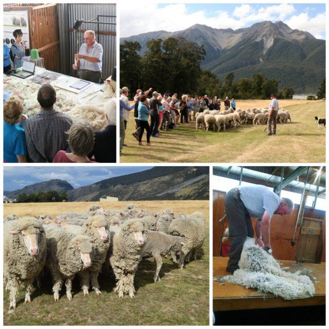 Sheep in New Zealand // www.mindfulmomma.com