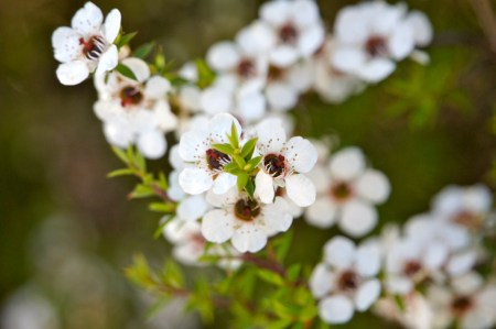 Health Benefits of Manuka Honey | Mindful Momma