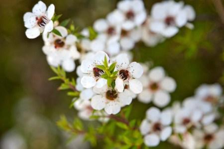 Health Benefits of Manuka Honey | Mindful Momma
