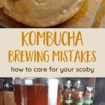 Kombucha brewing mistakes - scoby