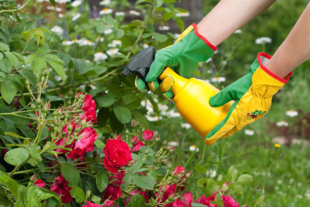 ... Especially When Plant Emerges From Dormancy And Their Leaves Begin To  Grow. Experts Often Recommend Using An All Purpose Garden Fertilizer ...