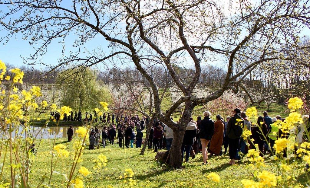 Plum Village - Mindfulness walk