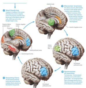 The Brain and the Stages of Meditation