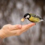 Hvad er compassion?