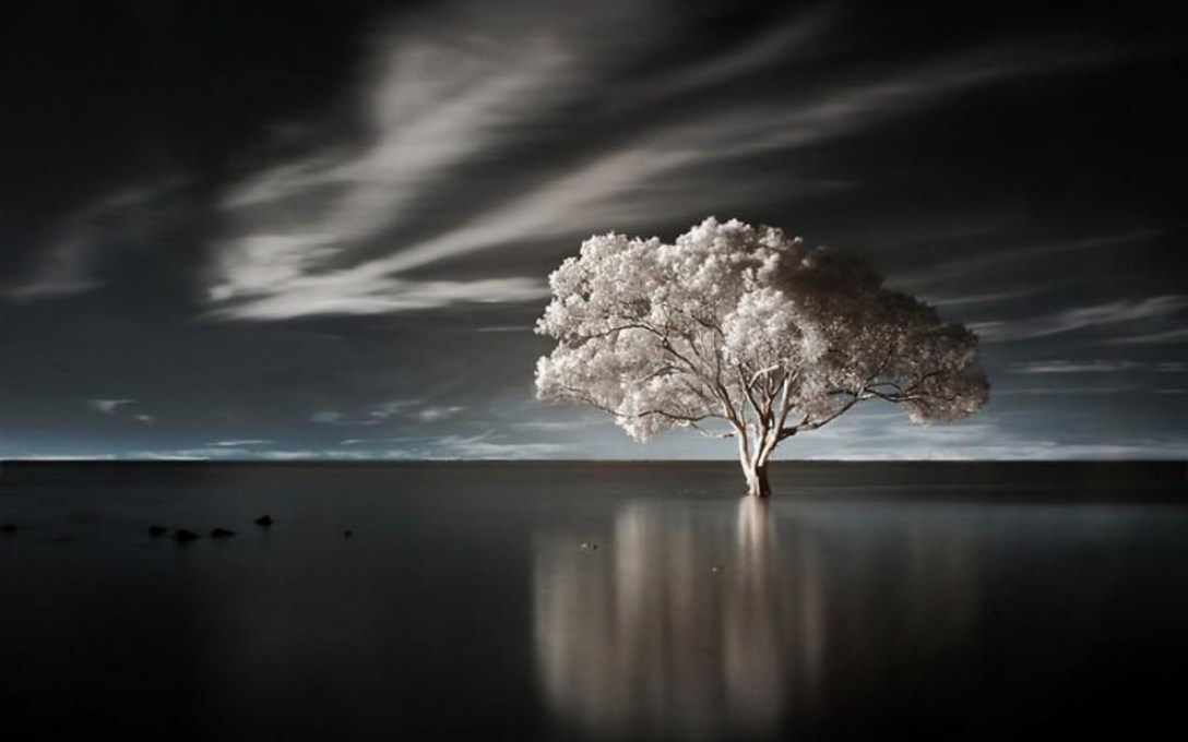 alone-tree