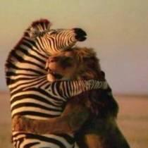 Kun jij compassie omarmen?