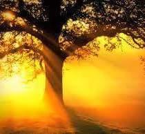 Laat de zon in je hart schijnen.
