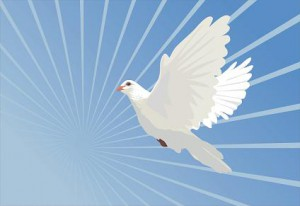 bird-of-peace-424