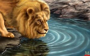 lion-drinking-water-on-lake-hd-wallpaper