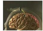 brain_gate_video_still.jpg