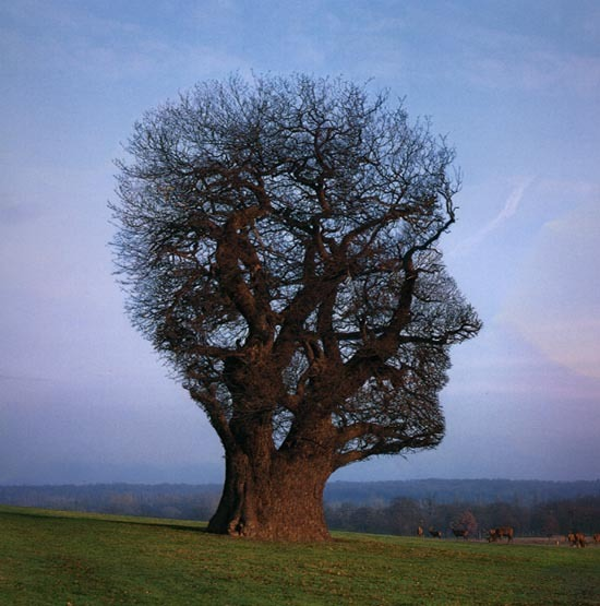 a large tree in the shape of a human head