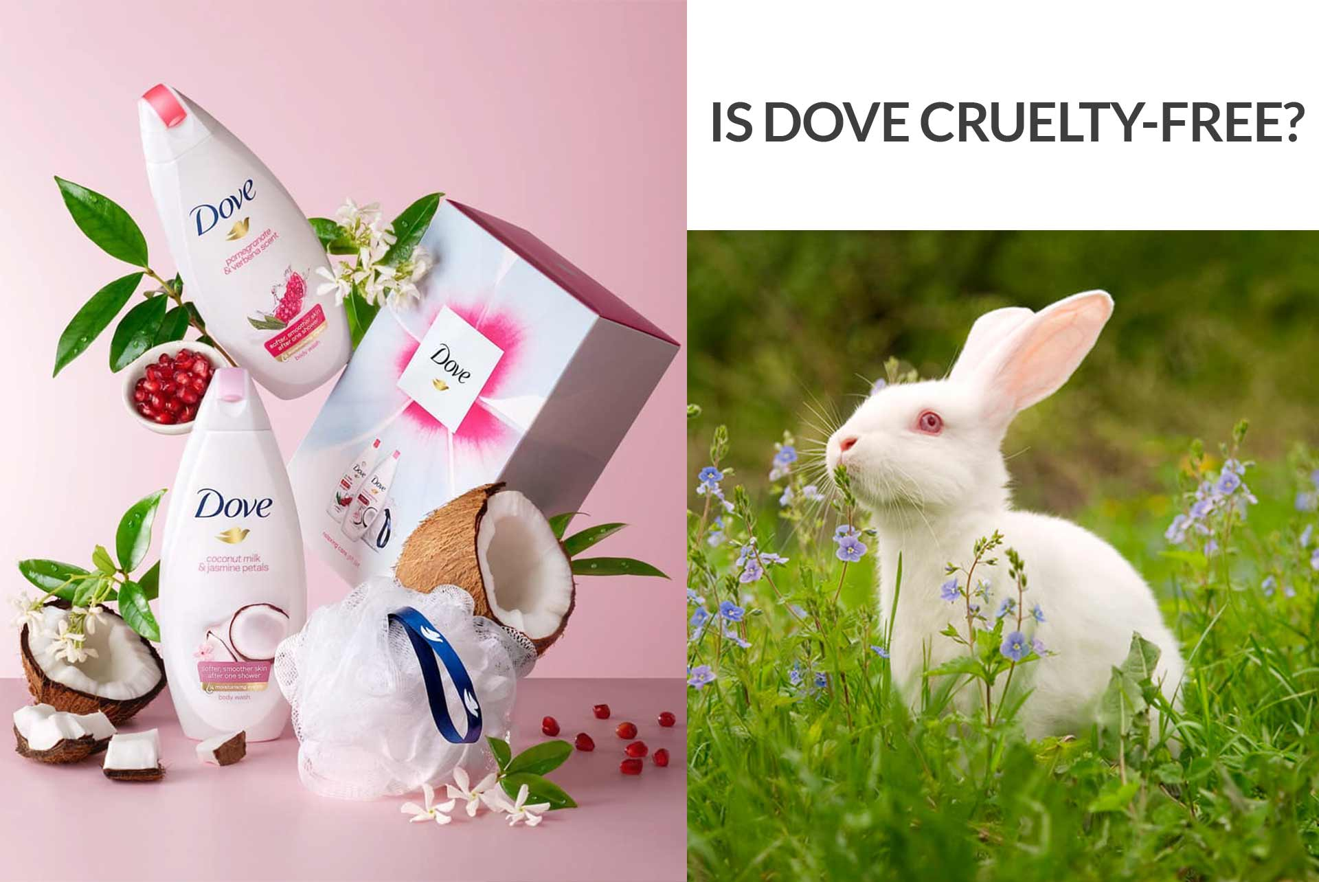 Is Dove Cruelty-Free?