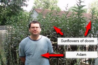The sunflowers of doom