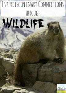Interdisciplinary Connections through Wildlife