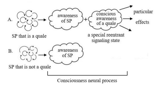 Effects of consciousness