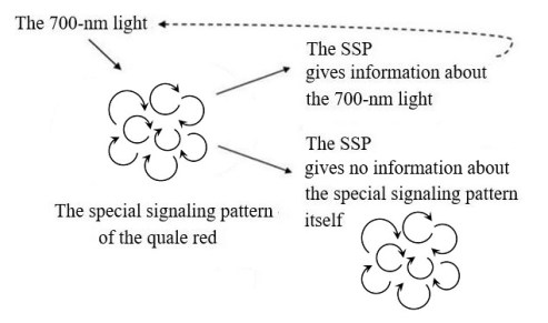 Qualia - special signaling pattern