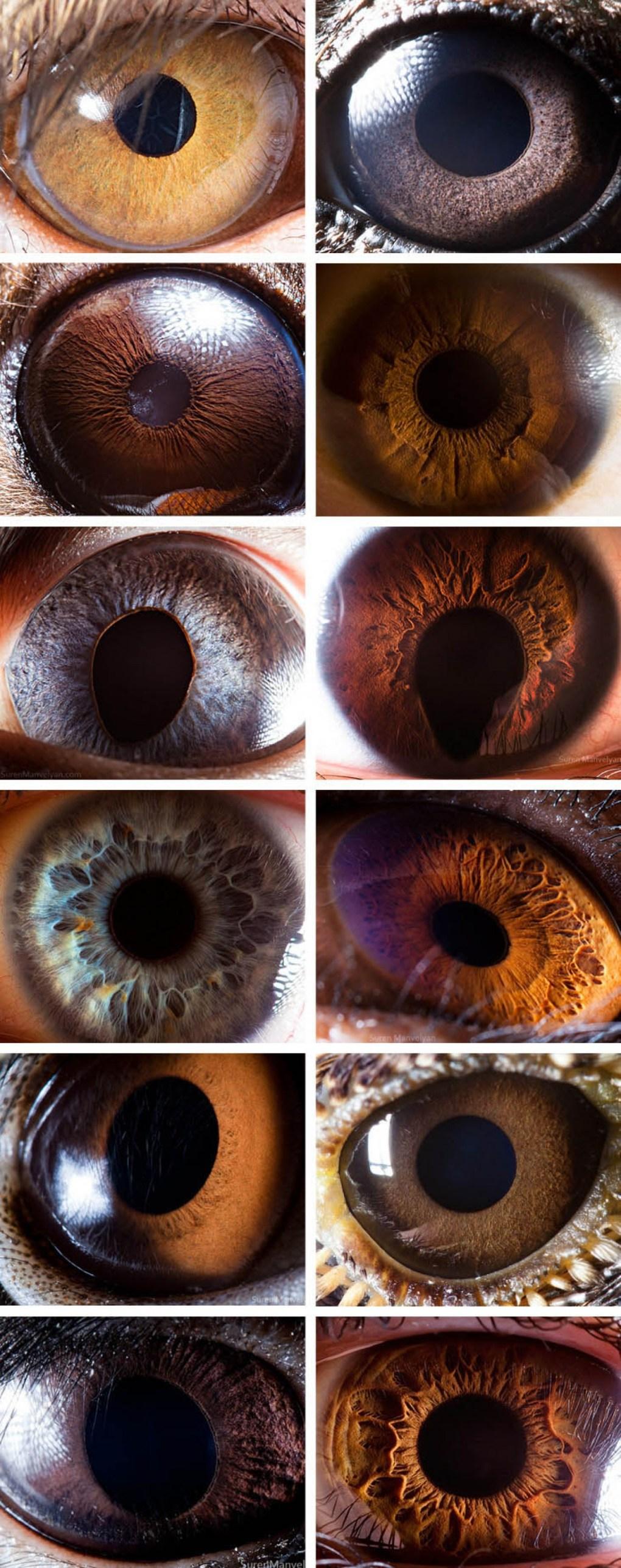 глаза людей и животных