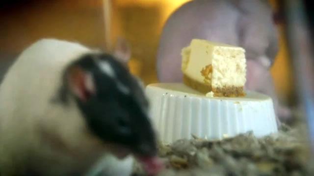 мышь на чизкейке