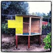 Almost done with the chicken coop. Just needs a window and a ladder...