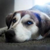 Sasha being, well, adorable.