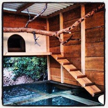 Chicken coop top floor.
