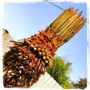 A well-pruned Sago Palm