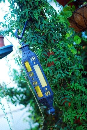 lantern among the jasmine