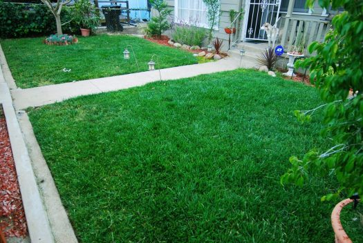 1_Bermuda Grass_Front Lawn