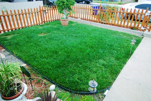2_Bermuda Grass_Front Lawn