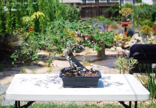 2_Chinese Elm_workspace