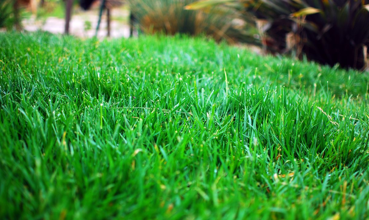A Sea of Green: Responsibly Maintaining a Green Lawn During a Drought