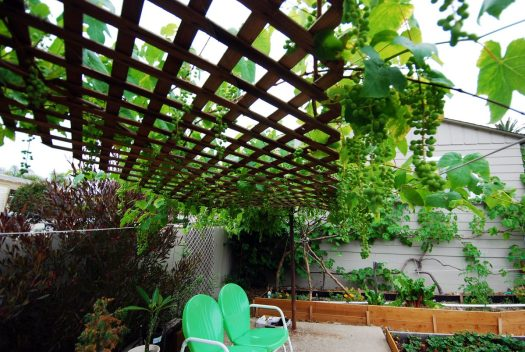 Grapevine Patio_Shade Portion Detail 1