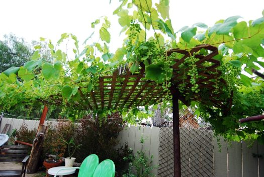 Grapevine Patio_Shade Portion Detail 2