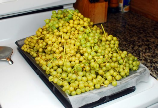 How to Make Organic Raisins 010_Blanched Niagara Grapes
