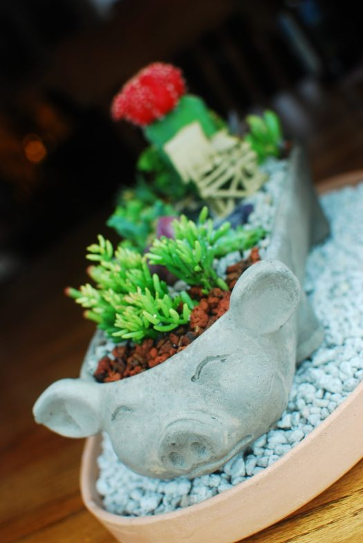 Little Pig Succulent Garden 03_Nestled in it's cozy tray