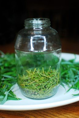Willow Water Rooting Hormone 08_Willow stems added to ball jar