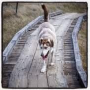 Sasha collecting bridge tolls.