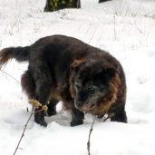 Edie navigates the deep snow