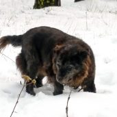 Edie navigates the deep snow