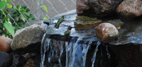 Everything is in Bloom 014_Hummingbirds taking baths