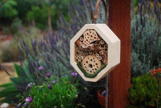 Bug Hotel 01_Feature Image