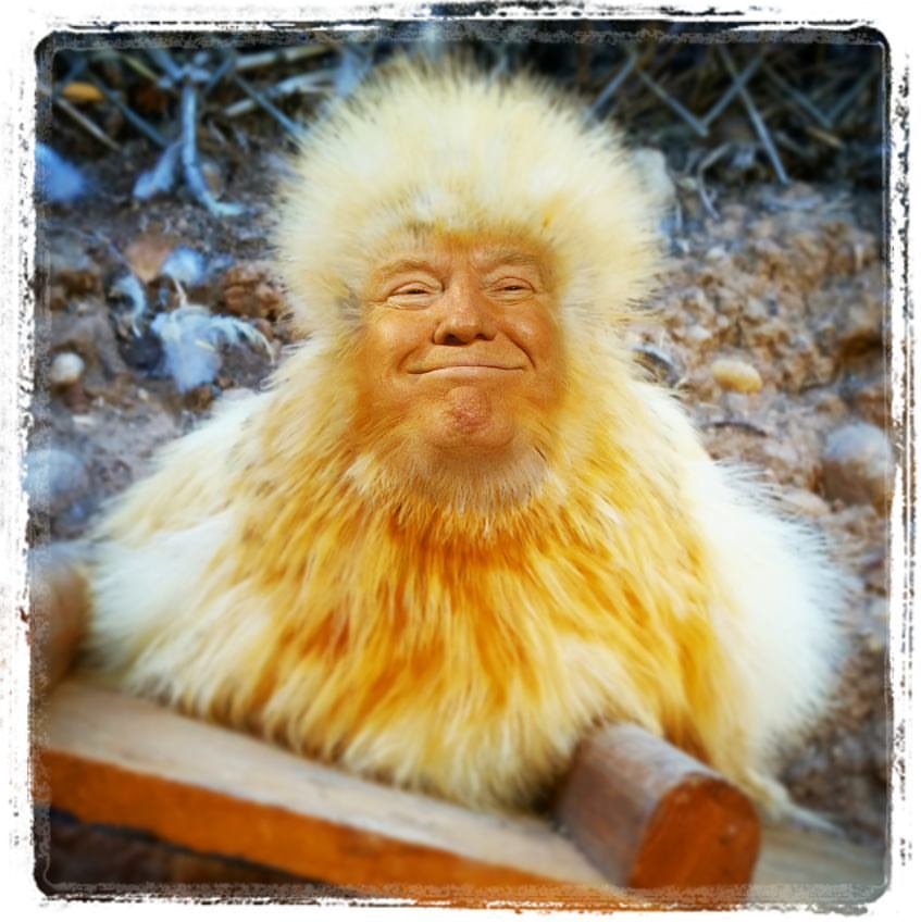 Image Result For Trump Didn T