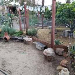 New seating area for chicken observations