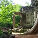 Baum Wurzel Tempel