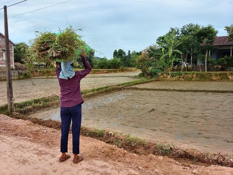 Arbeiterin im Bong Lai Tal
