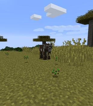 アカシアの木を集めに行こう