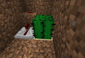 サボテンを植える